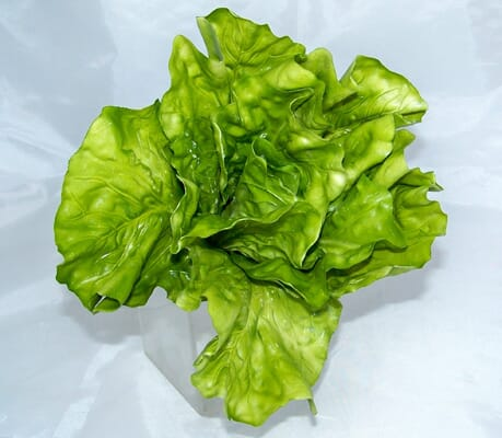 Fake Head of Lettuce